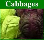 Cabbages Image